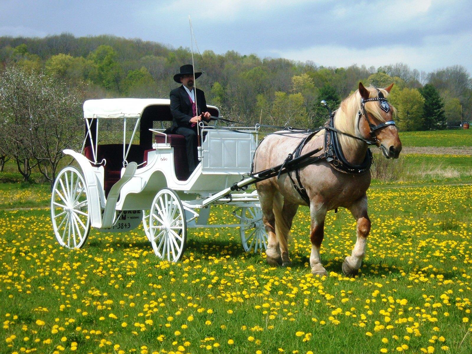 Wedding transportation for Car carriage