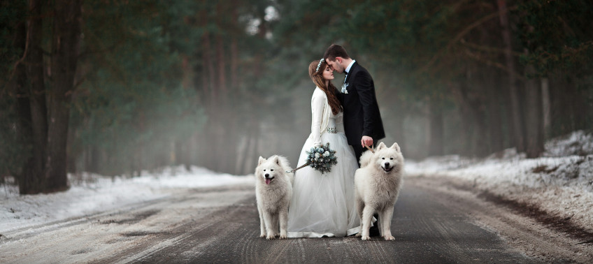 dogs-in-your-wedding